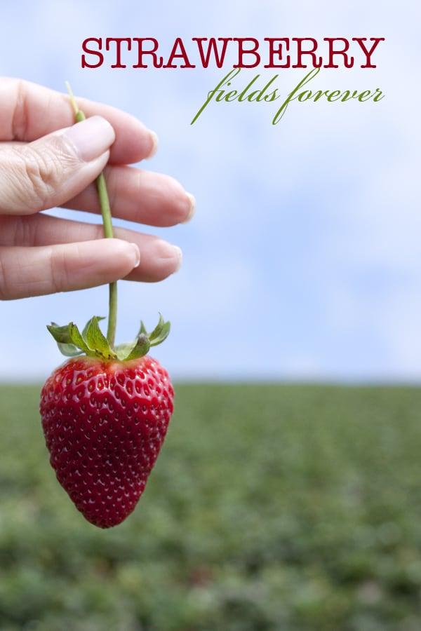 strawberry_fields_forever