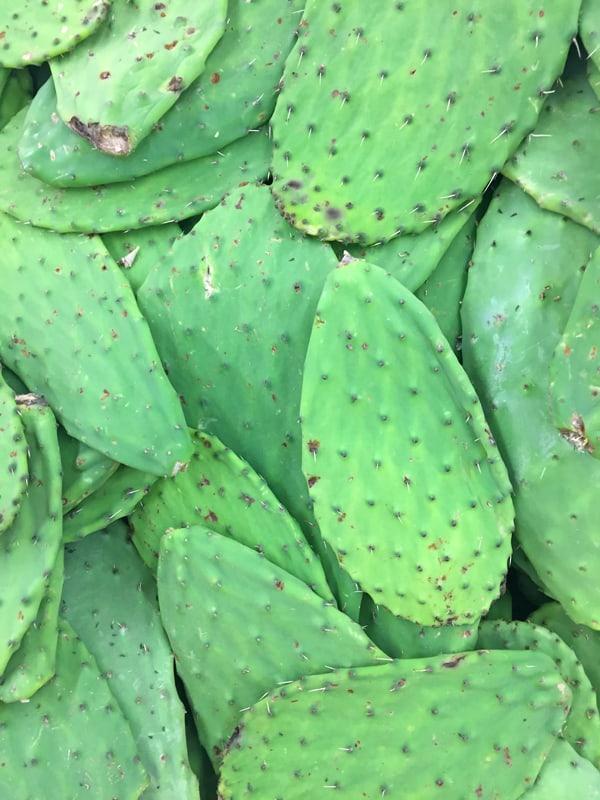 nopales-cactus-paddles