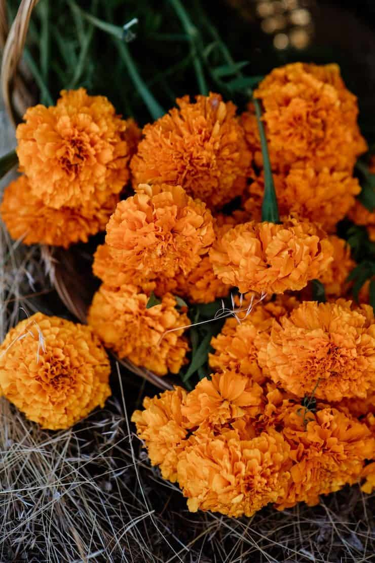 marigolds on ground for day of the dead