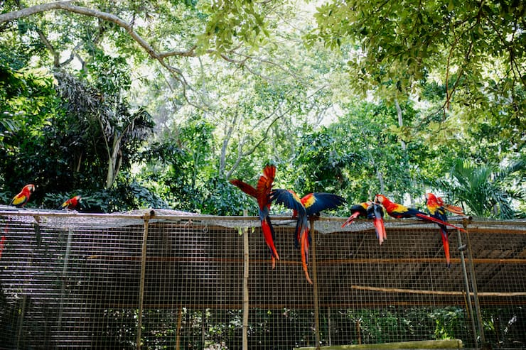 Western Caribbean Cruise excursion with parrots in Honduras