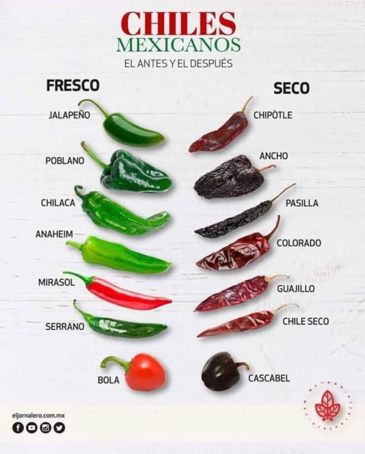 infographic illustrating fresh vs dried chile types and their names