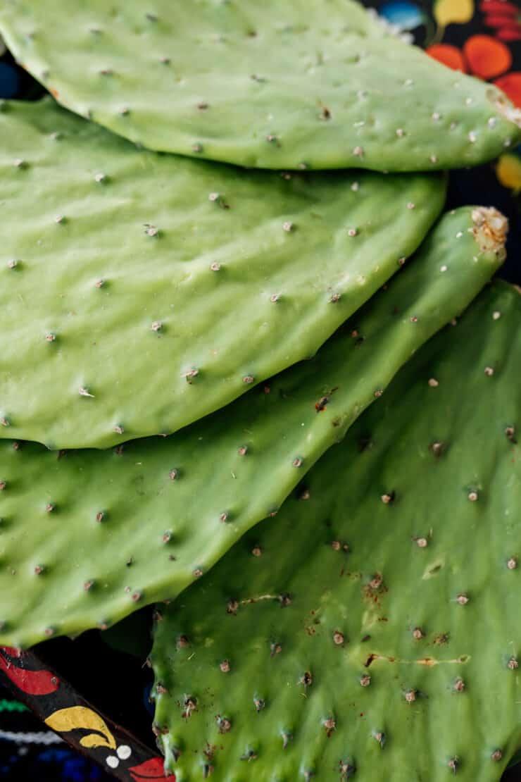 close up of cactus paddles nopales